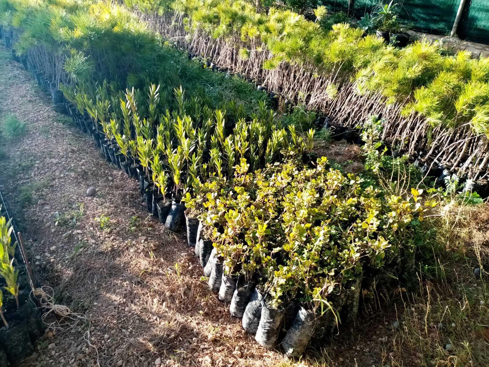 """Lampedusa, nasce un nuovo """"bosco"""": saranno piantati 6.500 alberi"""