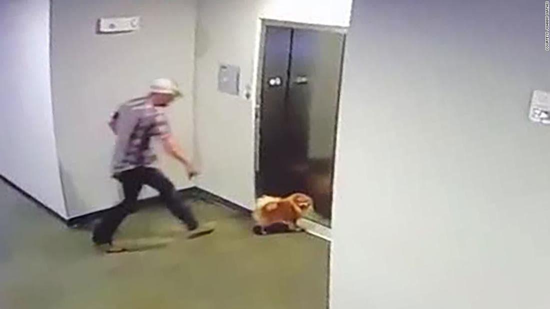 Cane rischia di restare strozzato dall'ascensore: il vicino di casa lo salva / VIDEO