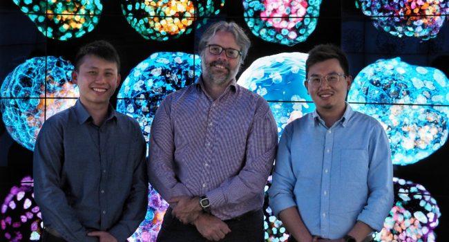 Creati i primi blastoidi, simil-embrioni umani da cellule staminali